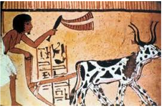 Egyptian-farmers