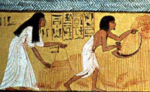 a look at the ancient egyptian farming techniques The ancient egyptians invented a number of different ways to bring water from  the nile  to water their crops, and such methods are still used by farmers today.